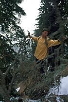 Refuge de Belfon, à la recherche du bois pour le feu, Chartreuse, ref ab0932-36GE