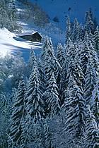 Vallée de Manigod, Haute-Savoie, ref ae2141-33GE