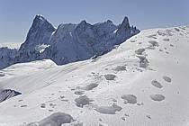 Depuis le Col du Plan, Grandes Jorasses, arête de Rochefort, Dent du Géant, Massif du Mont Blanc, Haute-Savoie, ref ba061196GE
