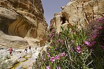 Randonnée en canyon, Canyon de Gweir et lauriers roses, ref cd070792GE