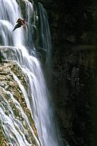 Canyoning, Cascade du Hérisson, Jura, ref cd2048-10GE