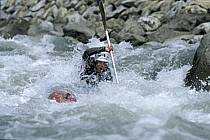 Whitewater kayaking, L'Isère, Aime, Savoie, Alpes, ref cf2983-04GE