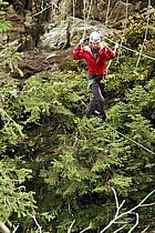 Parcours-aventure des Saisies, Beaufortain, Savoie, Alpes, ref ck042404GE