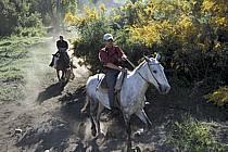 Patagonie, ref cs3204-08GE
