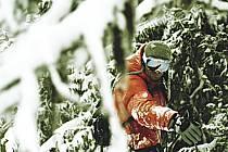 Skiing, Les Arcs, Savoie, Alpes, ref da070122GE