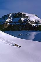 Ski-freeride, Lake Louise, Alberta, ref da2371-30GE