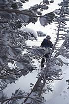 Ski-freeride, Jackson Hole, Wyoming, ref da2924-31GE