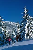 Plateau des Glières, Haute-Savoie, ref df2126-22GE