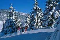 Plateau des Glières, Haute-Savoie, ref df2126-24GE