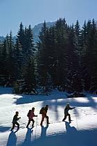 Plateau des Glières, Haute-Savoie, ref df2127-32GE