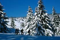 Plateau des Glières, Haute-Savoie, ref df2129-30GE