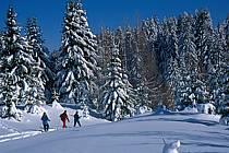 Plateau des Glières, Haute-Savoie, ref df2130-22GE