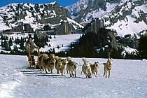 Chiens de traineau, Avoriaz, Haute-Savoie, ref di2623-14GE