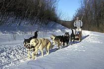 Traineau à chiens, Parc de la Mauricie, ref di3095-12GE