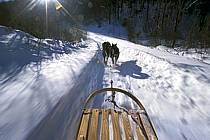 Traineau à chiens, Parc de la Mauricie, ref di3095-24GE