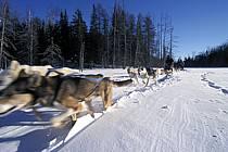 Traineau à chiens, Parc de la Mauricie, ref di3096-01GE