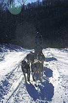 Traineau à chiens, Parc de la Mauricie, ref di3097-06GE