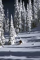 Ski freeride, Fernie, Colombie Britannique, ref dk2605-22GE