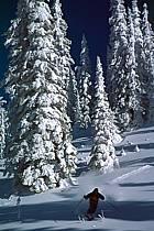 Ski freeride, Fernie, Colombie Britannique, ref dk2605-23GE