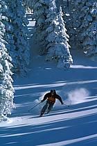 Ski freeride, Fernie, Colombie Britannique, ref dk2605-32GE