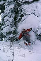 Fernie, Ski freeride, Colombie Britannique, ref dk2608-23GE