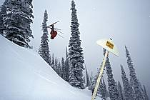 Fernie, Ski freeride, Ski freestyle, Colombie Britannique, ref dk2609-21GE