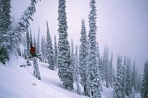 Fernie, Ski freeride, Ski freestyle, Colombie Britannique, ref dk2609-30GE