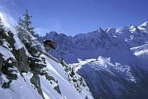 Ski freeride, Chamonix - Le Brévent, Haute-Savoie, Alpes, ref dk2681-29GE