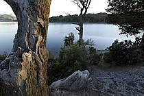 Lago Moreno, San Carlos de Bariloche, Patagonie, ref ea054730GE