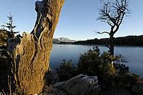 Lago Moreno, San Carlos de Bariloche, Patagonie, ref ea054735GE