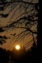 Lune de minuit en Laponie, ref ea061436GE