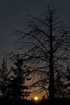 Lune de minuit en Laponie, ref ea061438GE