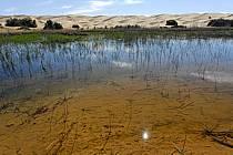 Désert du Sud Tunisien, au sud de Douz, Oasis, lac au milieu des dunes, ref ea063655GE