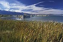 Mono Lake, The South Tufas, California, ref ea0664-26LE