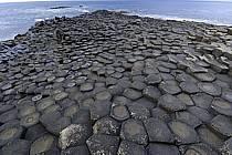 Orgues basaltiques, Giant's Causeway (Chaussée des Géants), Ulster (Irlande du Nord), ref ea071929GE