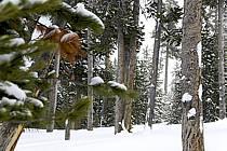 Yellowstone National Park, Wyoming, Montana - Yellowstone National Park, Wyoming, Montana, ref ea080894LE