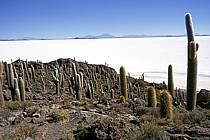 Désert de sel, Uyuni, Sud Lipez, ref ea1218-29LE