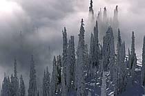 Mountain-covered / Forêt enneigée, Colombie Britannique, ref ea2604-06GE
