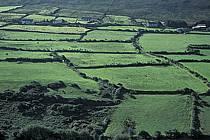 Paysage d'Irlande, ref ea3173-26LE