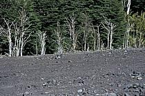 Patagonie, ref ea3186-04LE
