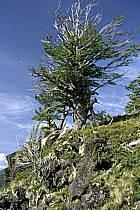 Patagonie, ref ea3186-10LE