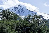 Patagonie, ref ea3187-02LE