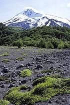 Patagonie, ref ea3187-05LE