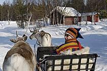 Promenade en traineau à rennes, Vuotso, Laponie, Markku Nikodemus, ref eb061561GE
