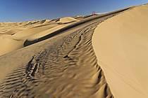 Désert du Sud Tunisien, au sud de Douz, Oriflammes dans les dunes de sable, ref eb063664GE