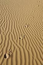 Désert du Sud Tunisien, au sud de Douz, Traces de pas dans les dunes de sable, ref eb063683GE