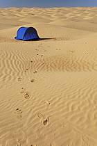 Désert du Sud Tunisien, au sud de Douz, Traces de pas et bivouac dans les dunes de sable, ref eb063694GE