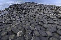Orgues basaltiques, Giant's Causeway (Chaussée des Géants), Ulster (Irlande du Nord), ref eb071930GE