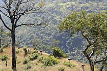 Trek entre Douguiha et Yembérulé, porteurs - Trek from Douguiha to Yemberule, porters, ref eb072643GE