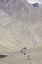 Trek en direction du col de Stok, Ladakh - Trek to Stok pass, Ladakh, ref eb081670GE